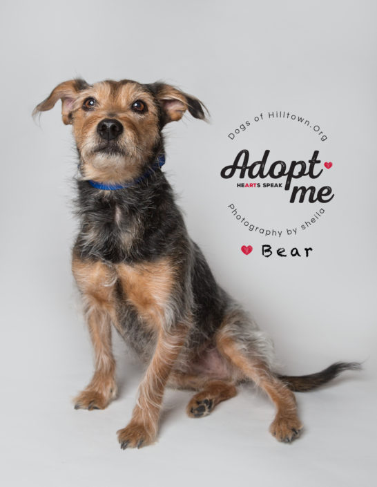 Adoptable Dog, Cute Terrier, Texas Pet Photographer, Rescue Texas, Dogs of Hilltown, Denton Texas Pet Photographer