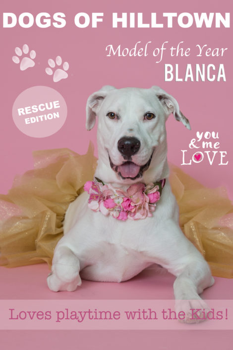 Adoptable Mixed Breed Deaf female Dog