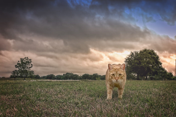 North Texas Denton Texas Cat Photographer