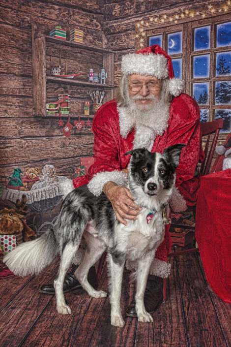 Christmas Border Collie & Santa, Denton Texas Pet Photographer