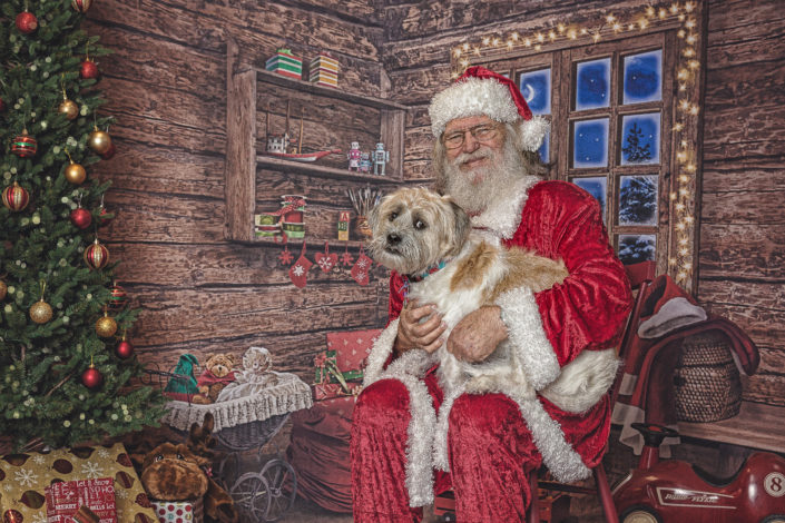 Denton Pet Photographer, Santa & Dog, Christmas Dog