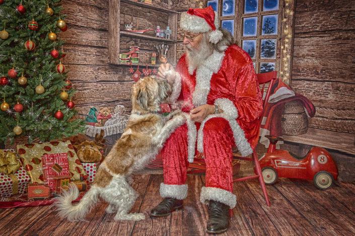 Santa & Cute Dog, Denton Texas Pet Photographer