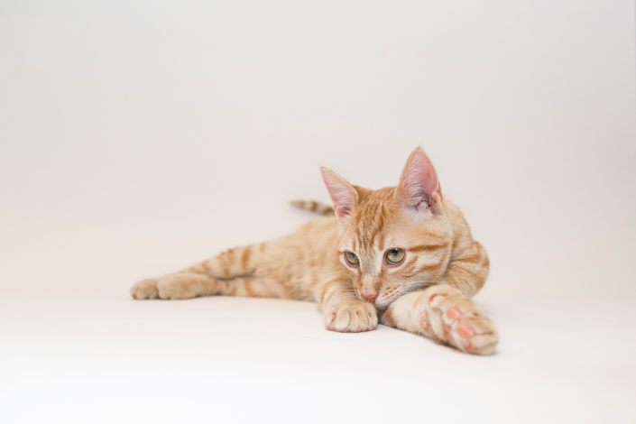 Orange tabby cat stretched out